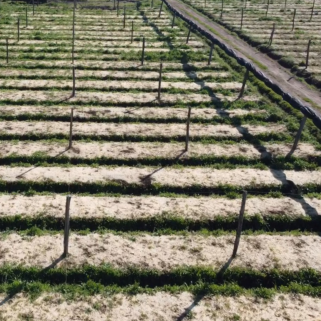 agricola-di-rosa-i-terreni